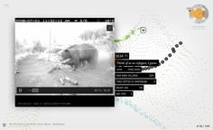 """Bear 71 is an exploration into wildlife surveillance and how habitat management challenges the notion of """"the wild"""" in Banff."""