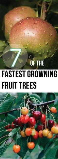 7 Of The Fastest Growing Fruit Trees – Making DIY Fun