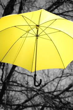 I love the way that they contrasted the black and white picture with the bright yellow umbrella.  Love this!