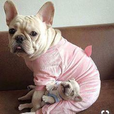 Best MOM- . . . #frenchies #frenchiepuppy #frenchbulldoglove #frenchielife #frenchbulldogoftheday #instafrenchie #frenchbulldogofinstagram #frenchiesociety #thefrenchiepost #ilovemyfrenchie #frenchiegram #batpig #frenchbulldogpuppies #frenchbulldogpuppy #frenchbulldoglife #frenchbulldoglovers #frenchbulldogsofig #dailyfrenchie #buhi #loveabully #frenchieoftheday #frenchiephotos #frenchbully