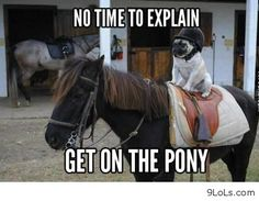 Dog and horse funny images http://9lols.com/dog-and-horse-funny-images/