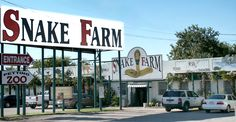 Snake Farm! Right outside San Antonio off of I 35, It might not look like much, but there is an exotic zoo out back with all sorts of fun surprises!