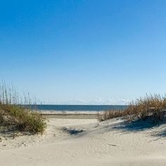Here are the best Charleston, South Carolina beaches to visit, including Folly Beach, Sullivan's Island and Isle of Palms. Isle Of Palms South Carolina, Hilton Head South Carolina, Carolina Beach, Sullivans Island South Carolina, Sullivans Island Sc, Hilton Head Beach, Hilton Head Island, Charleston Hotels, Driftwood Beach