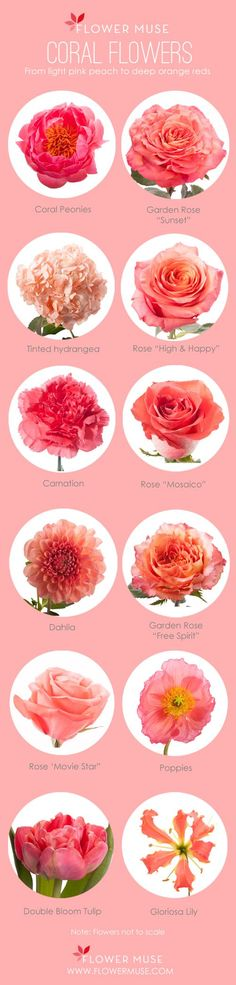 Looking for some coral inspiration? We share our favorite coral flowers - from garden roses to peonies - these blooms are perfect for any wedding or event! #coral #spring #flowers