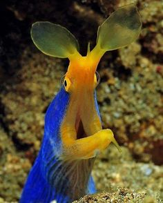 sea life - sea life photography - sea life underwater - sea life artwork - sea life watercolor sea l Beautiful Sea Creatures, Deep Sea Creatures, Animals Beautiful, Underwater Creatures, Underwater Life, Trucage Photo, Fauna Marina, Water Animals, Sea And Ocean