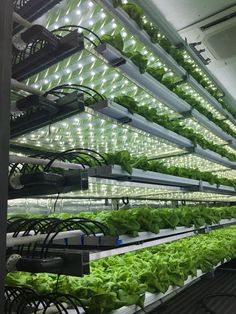 Go green and create your own hydroponics system by growing plants in water. Read on to learn 20 incredible ideas for DIY hydroponics Home Hydroponics, Hydroponic Farming, Aquaponics Greenhouse, Hydroponics System, Hydroponic Tomatoes, Hydroponic Strawberries, Hydroponic Lettuce, Greenhouse Gardening, Vegetable Gardening