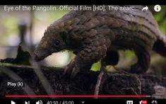 Parrot, Animals, Parrot Bird, Animales, Animaux, Animal, Animais, Parrots