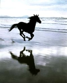 I remember galloping in the surf, in Brooklyn, NY!