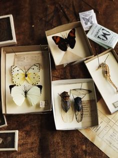 ∷ Variations on a Theme ∷ Collection of insects and sea life
