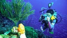 Best Places for Underwater Photography - Professional Photography Review