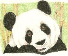 Photobucket Panda Bear, Colored Pencils, Animals, Art, Colouring Pencils, Art Background, Animales, Animaux, Kunst