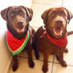 Irmãs gêmeas! #patudos #dog #cachorro #pet