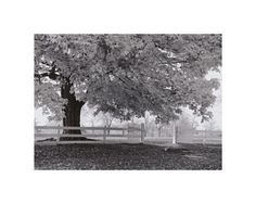 Autumn Morning by Jim Morris
