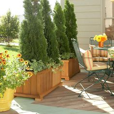 arborvitae trees in planters on deck | Small Tree in Container Privacy Planter, Garden Privacy, Privacy Landscaping, Outdoor Privacy, Backyard Privacy, Backyard Patio, Landscaping Ideas, Porch Privacy, Patio Decks