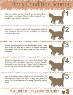 Guidelines to tell if your cat is a healthy weight