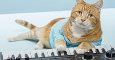 Keyboard Cat, Internet Sensation, Dies at Age 9 -- Bento, aka the Keyboard Cat, sadly passed away at the age of 9 on March 8th. -- http://movieweb.com/keyboard-cat-bento-death-dead-youtube-star/