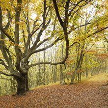Valokuvatapetti - Autumn Tree in Stenshuvud, Sweden