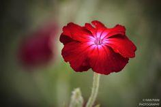Fiore in estate