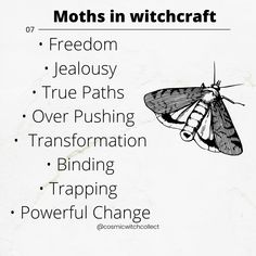 Spirit Animal Totem, Animal Spirit Guides, Magick Spells, Witchcraft, Magic Crafts, Wiccan Magic, Magic Day, Wives Tales, Wiccan Crafts