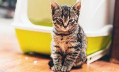 Waarom kiezen voor een ecologische kattenbak?  http://www.allesoverhuisdieren.be/verzorging/een-ecologische-kattenbak-5-keer-ja