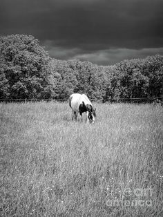 Gypsy Horse, Rain, Horses, Animals, Rain Fall, Animales, Animaux, Animal, Waterfall