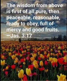 James 3:17 James 3, Best Fruits, Wisdom, Pure Products, God, Dios, Allah, The Lord