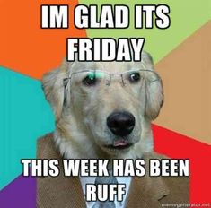 Adorable Mr Dog is tired after a rough week. Definetley some changes and new adventures on the horizon.  #dogs #memes #doggo #funny Funny Friday Memes, Funny Dog Memes, Friday Humor, Funny Dogs, Hilarious Jokes, It's Funny, Daily Funny, Funny Quotes, Friday Memes For Work