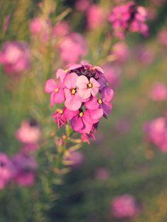 In the grounds of Malahide Castle. Summer Flowers, Love Flowers, Tea Roses, Artist Art, Dublin, Iphone Case Covers, Fine Art America, Photographs, Shots
