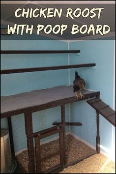 Clean Chicken Droppings With Ease by Building a Chicken Roost with a Poop Board!