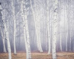 Birch Trees in Fog Meander Moonrise Maine Seascape No. 1 Maine Coast No. 2 Birch Trees in Spring Maine Coast No. 3 Cloudscape Winding Path i...