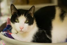 Moo Moo by Save-A-Pet Adoption Center, via Flickr