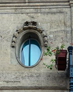 Paris Through My Lens: La fenêtre et la vigne