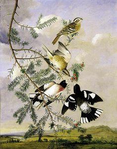 birds on evergreen