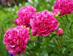 çiçek resmi - Google'da Ara