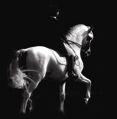"""Riders should ask the horse to do things in harmony, and in the horse's time, because it is his body being borrowed for the athletic efforts. The mind of the rider can wait, and hold in check impatience and impertinence. The horse is a calender; ask and wait. The horse will deliver when he is ready."" ~ Charles de Kunffy"