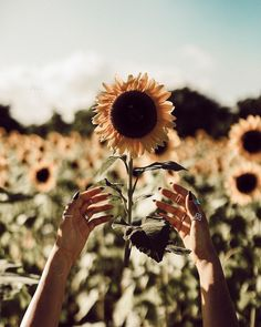 Boho photograph of a raised hands catching a sunflower. Wild Flowers, Beautiful Flowers, Good Vibe, Sunflower Fields, Flower Aesthetic, Cloudy Day, Foto Pose, Mellow Yellow, My Flower