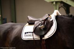 Roxanne Legendre : Saddles - Saut Hermès
