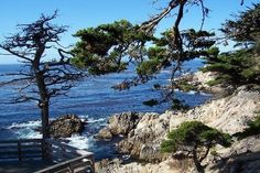 This is one of my favorite pics. Monterey California down 17-mile road along the coast and near Carmel.