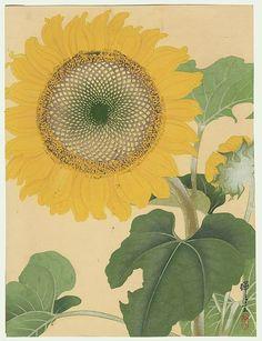 IKEDA Zuigetsu(池田瑞月 Japanese, 1877-1944)Sunflowers.