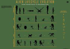 Google Image Result for http://3.bp.blogspot.com/-BP9Yww6E3VU/T-xqC9sB4DI/AAAAAAAAQl4/KPQMspKD0_A/s1600/Alien-lifecycle-evolution-infographic-geektwins-4681x3311.png