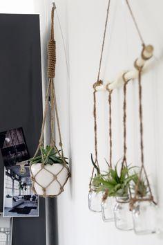 Luftpflanzen