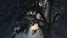 The Eldergleam