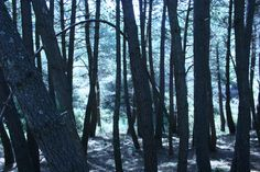 """#Malaga - #Ojen - Sierra Blanca - 36°34'33.77"""" - 4°53'3.847"""" Las tierras del término municipal se extienden desde Sierra Blanca a Sierra Alpujata y bajan por los valles de los ríos Real y Ojén hasta los municipios de Marbella y Mijas, De este modo, aunque no tenga salida al mar, se sitúa de lleno en la comarca de la Costa del Sol occidental"""