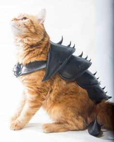 3D Printed #Cat #Armor: Meowster of the Universe: You want proof... - Geek gifts