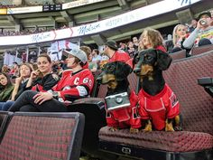 Crusoe the celebrity dachshund Crusoe The Celebrity Dachshund, Baby Dachshund, Sports Games, Your Dog, Monster Trucks, Dachshunds, History, Couples, Celebrities