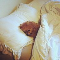 Belle the Pom - Dog of the Week Candidate - PuppyDogSwag.com | Repin to Vote!