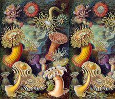 Ernst Haeckel Sealife fabric by ivygirl2244 on Spoonflower - custom fabric