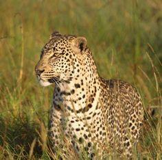 Leopard ~ www.ebensafaris.com ~ photo: Carol Schoeman