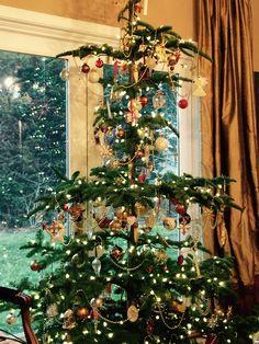 my fav...high alpine trees for Christmas! 2014