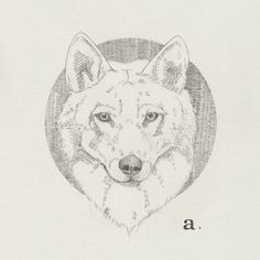 a. Wolf by Peter Carrington, via Flickr